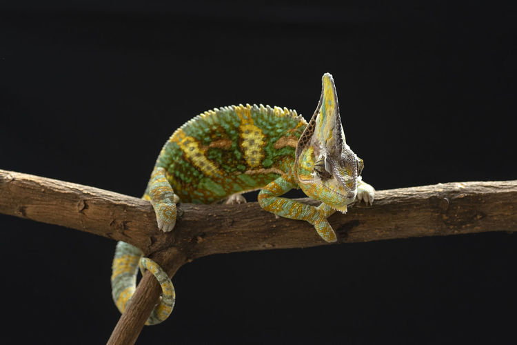 Close-up of lizard on twig