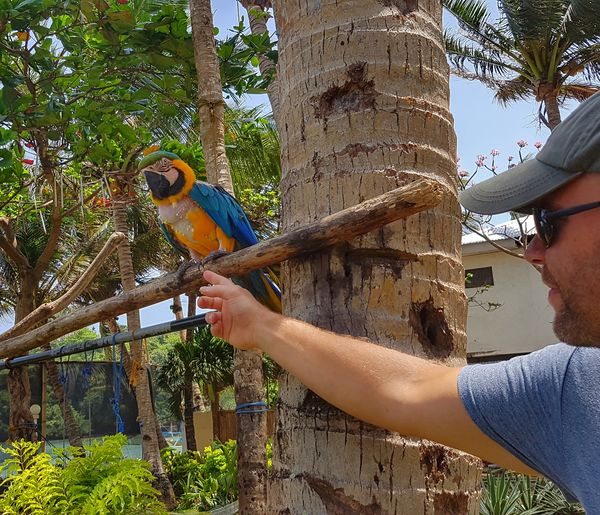 Meeting a local in Boracay Philippines Connected By Travel One Animal Tree Parrot Animal Wildlife One Person Outdoors EyeEmNewHere EyeEm Nature Lover EyeEm Best Shots