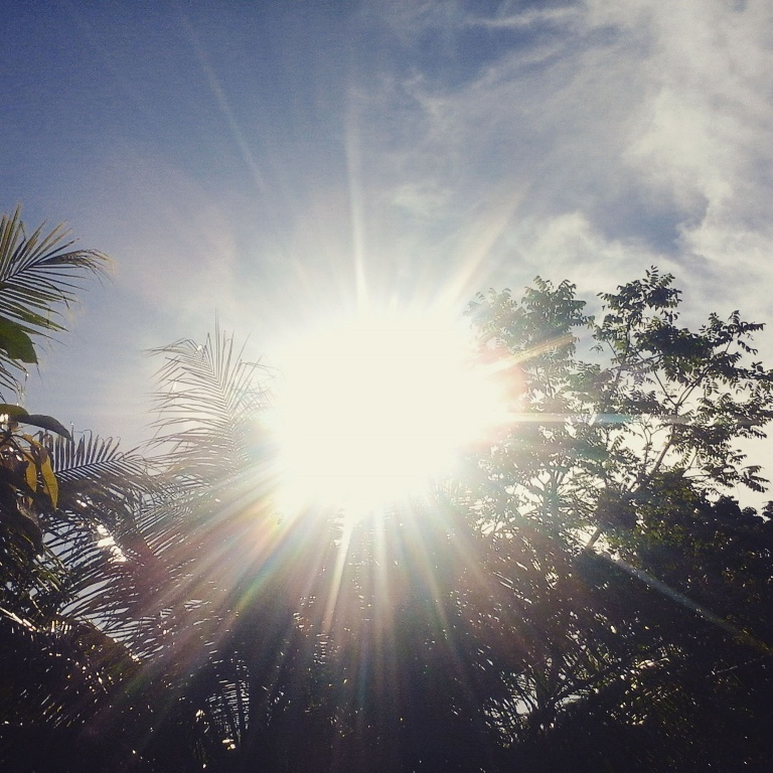sun, sunbeam, lens flare, sunlight, tree, bright, low angle view, sunny, sky, tranquility, nature, beauty in nature, growth, back lit, tranquil scene, scenics, silhouette, day, shining, brightly lit