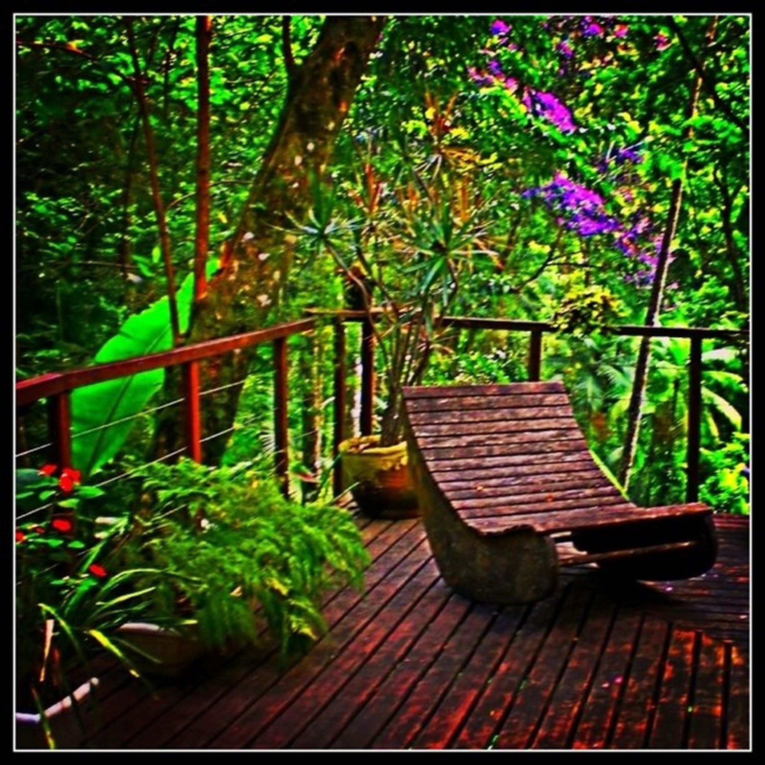 transfer print, growth, bench, tree, wood - material, plant, empty, flower, chair, auto post production filter, absence, park bench, nature, park - man made space, wooden, seat, beauty in nature, front or back yard, potted plant, wood
