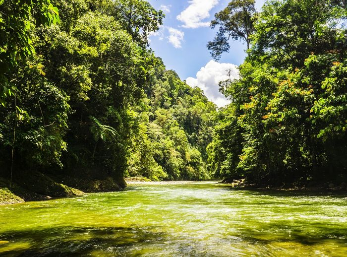 Tree Green Color Nature Water Beauty In Nature Outdoors Day Sunlight Shadow Grass No People Growth Sky Scenics Tropical Forest INDONESIA Sumatra  Bali Travel Ecuatorial Rainforest Jungle River Hill