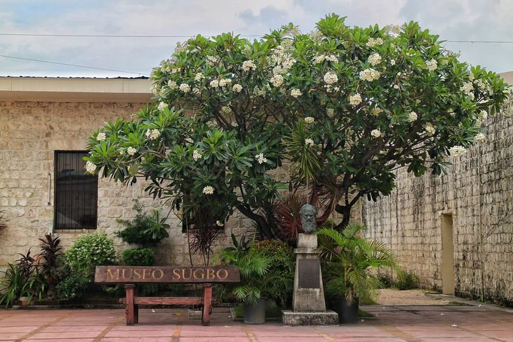 Museo Sugbo Museo Sugbo Museum Cebu City Philippines Tree Architecture Sky Building Exterior Built Structure Bench Tranquil Scene Scenics