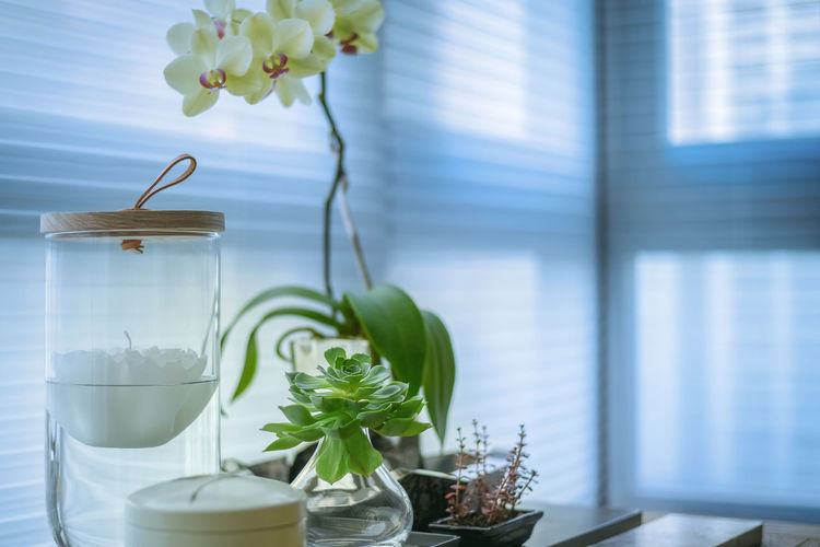 Little plant beside the window Lifestyle Modern Nature Light Relaxing Backgrounds Beauty In Nature Close-up Day Fitness Flower Flower Head Fragility Freshness Healthy Eating Hotel Indoors  Interior Leaf Light And Shadow Nature No People Simple Table Vase Window