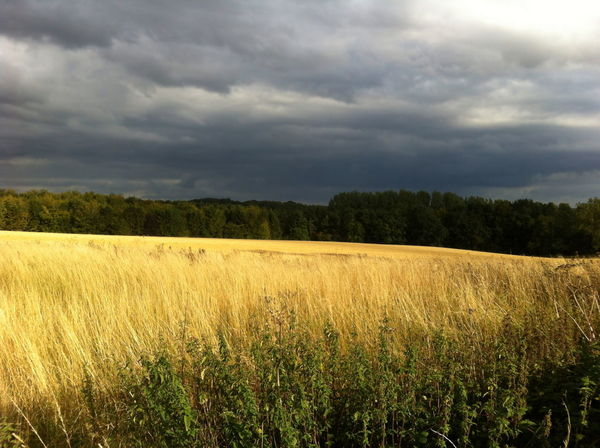 Summer Crops before Harvest Cloudy Sky Countryside Dramatic Sky Farmland Landscape Landscape Photography No People Open Field Rural Scene Sky The Cotswolds Wheat Field Wheat Fields Yellow