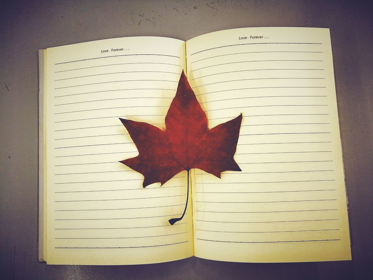 book, leaf, high angle view, no people, directly above, paper, indoors, close-up, day