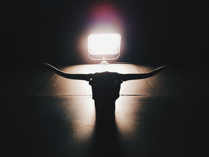 Silhouette Illuminated Indoors  Shadow No People Close-up Day Street Architecture Lamps Light Bulls Head Bull Bull Head Skull Cow Head Bull Skull Bull Horn Night Darkness bull head horn in seoul south korea
