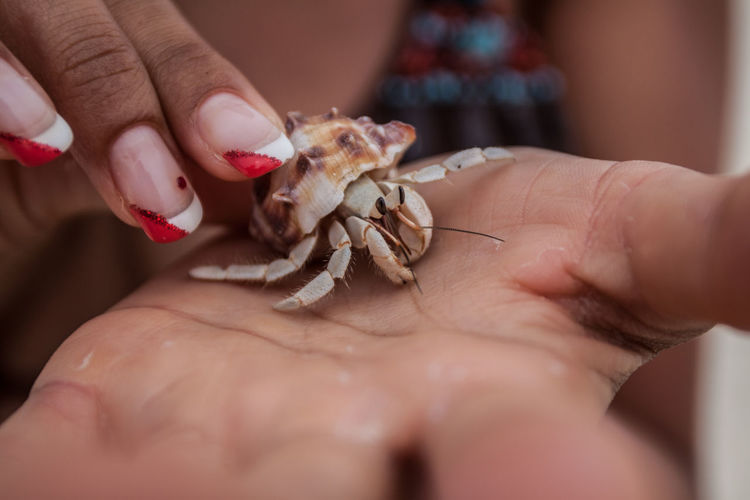 Cropped image of hands holding hermit crab