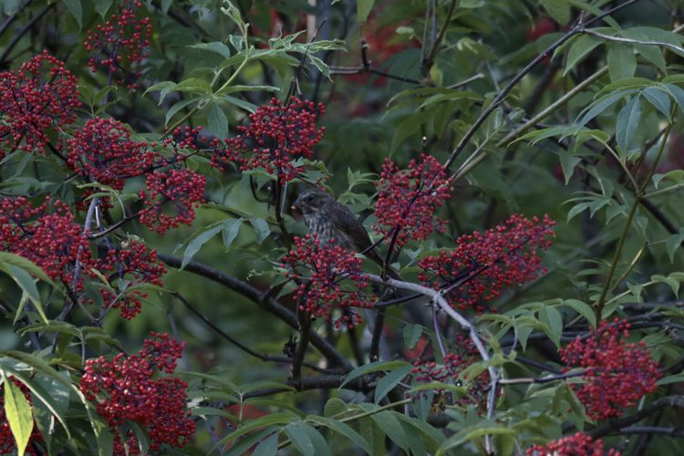 Red berries growing on plant