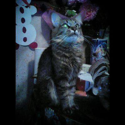 Kyzya Mylovelycat Кузьма кузя ВнимательныйВзгляд КузякаЖелезяка МойЛюбимыйКот SquareInstaPic