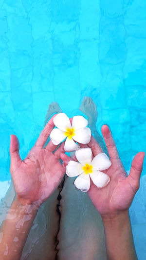 Midsection of person holding flower in swimming pool