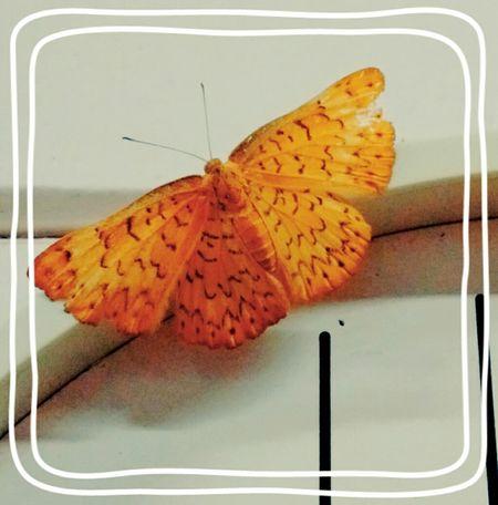 Axé! Nature Colors Natureza <3 Oya Life Borboletas Butterfly