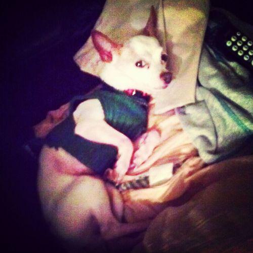 omy to sleep. My Sleepy Dog Ilovemydog