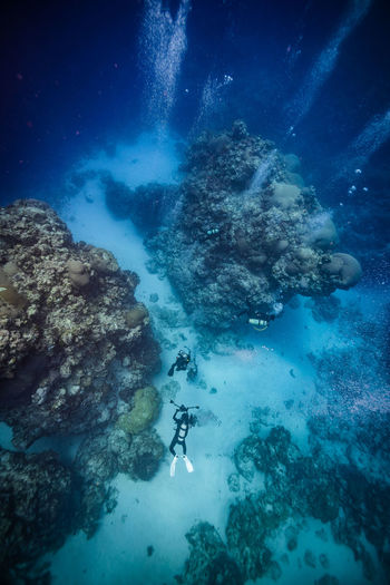 Yap, Micronesia Adventure Blue Day Exploration Leisure Activity Lifestyles Nature One Person Only Men Outdoors People Real People Scuba Diver Scuba Diving Swimming UnderSea Underwater