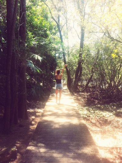 Forest Rainforest Nationalpark Port Macquarie Australia Hi! East Coast Beautiful Day Summer Outdoors Enjoying Life Tranquility Backpacking Beauty In Nature Memories
