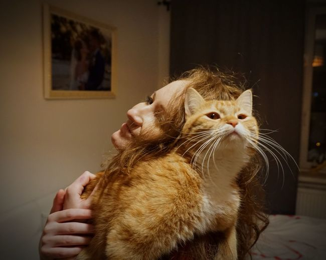 😻 #love #cat #cute #redhaircat #RedHead  Domestic Cat Pets One Animal Indoors  Animal Themes Domestic Animals One Person Mammal People Close-up