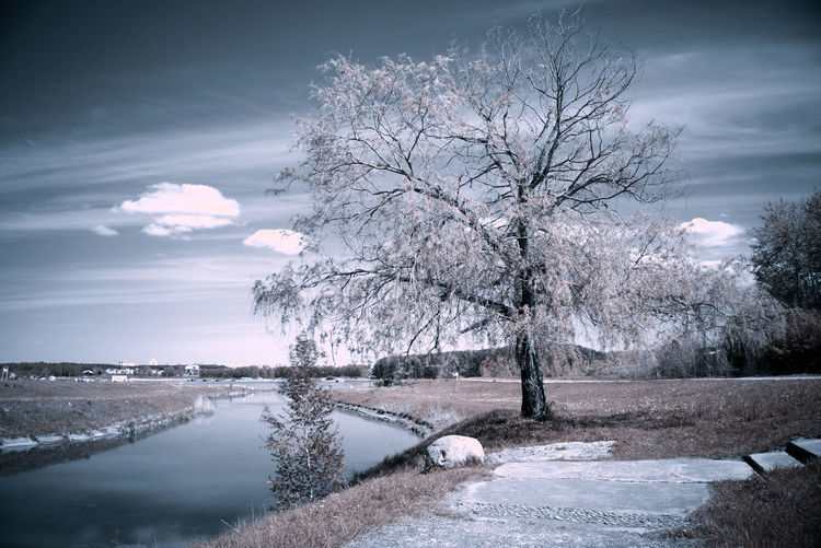 Tree Tranquility Cloud - Sky No People Outdoors Sky Beauty In Nature Water Night Fragility Close-up Nature Infraredphotography Infrared Photo Infrared Photography Infrared Sony Sony Alpha Minolta Lens
