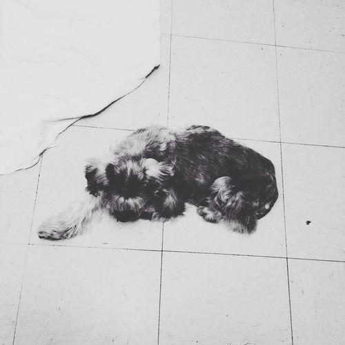 Still missing ya. Dog Mybestfriend