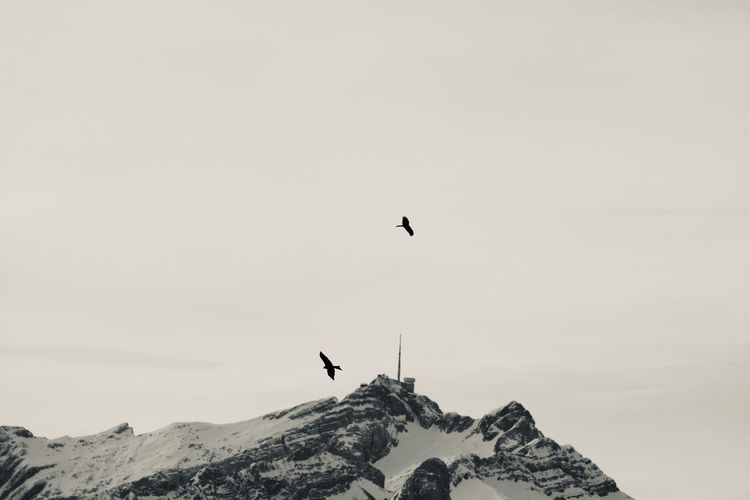 Bird flying over mountain against sky