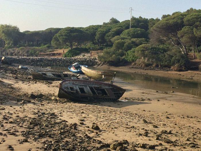 Barco Marea No