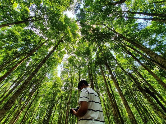 Low angle view of man in forest