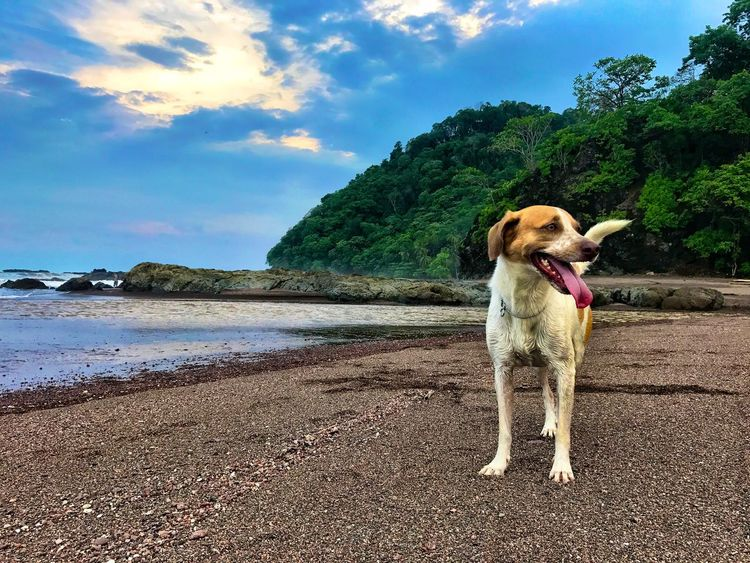 BrunoCarvalhoPhotos Dog Sky One Animal Day Nature Water Outdoors Cloud - Sky Beauty In Nature Mybestfriend Costa Rica Surfinglife Beach Sea Sunset Blue
