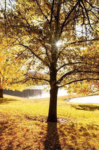 Sunlight filtered through autumn leaves Autumn Autumn Leaves Autumn Colors
