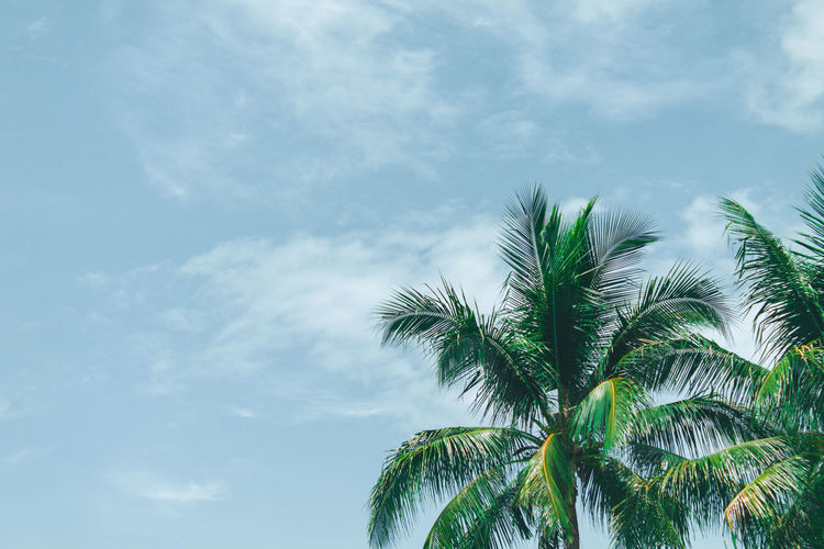 Sky and trees EyeEmNewHere Tree Palm Tree Leaf Branch Sky Close-up Green Color Cloud - Sky Tropical Tree Palm Leaf Coconut Palm Tree Coconut Tropical Climate