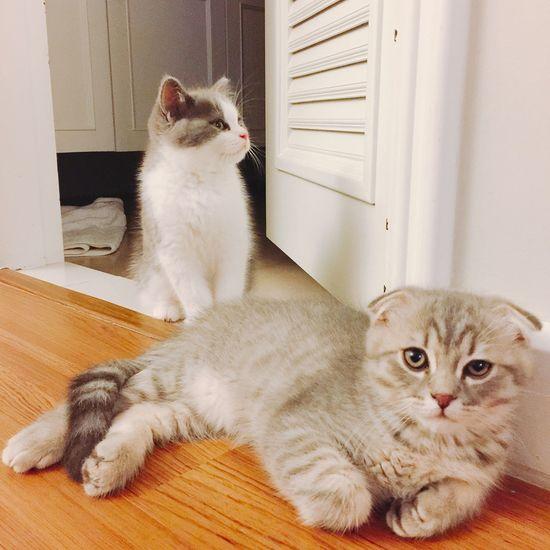 Brotherhood Kitten Kittens Kittensofinstagram Kittens Of Eyeem Kittenoftheday Cat Cats Catsofinstagram Cats Of EyeEm Instacats Catstagram IPhoneography