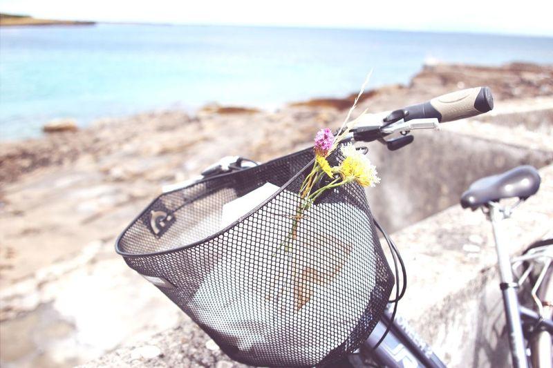 Close-up of bicycle basket at shore