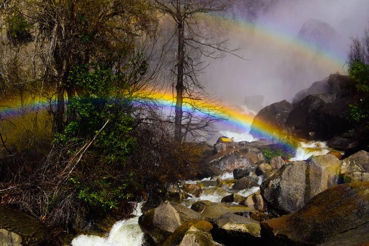 Yosemite Nature