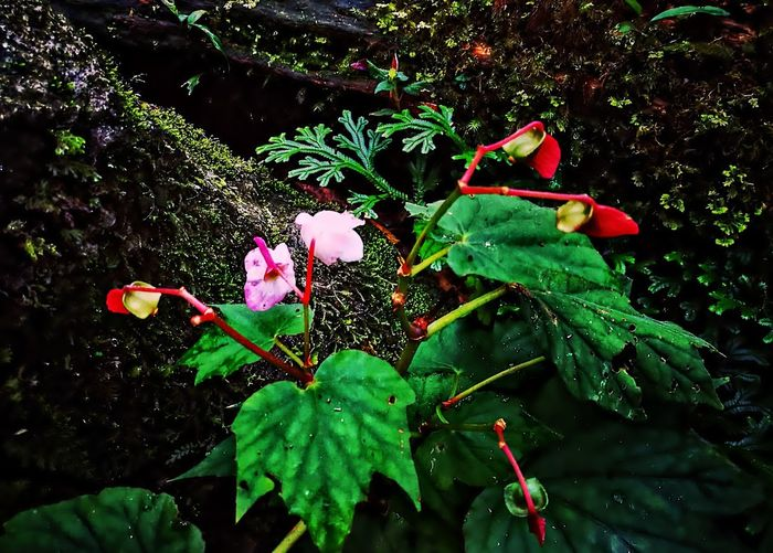 Growth Green Color Leaf Nature Flower Plant Outdoors Freshness Day No People Close-up Fragility Beauty In Nature Tree