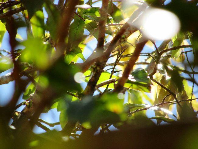 Tree Defocused Leaf Branch Close-up Sky Plant Life Petal Pollen Tree Trunk Blooming Twig Growing Dahlia Streaming Cosmos Flower Hibiscus Fragility Stamen Plant Bark In Bloom Koala Flower Head Single Flower Single Flower Single Flower Woods Woods Woods Woods