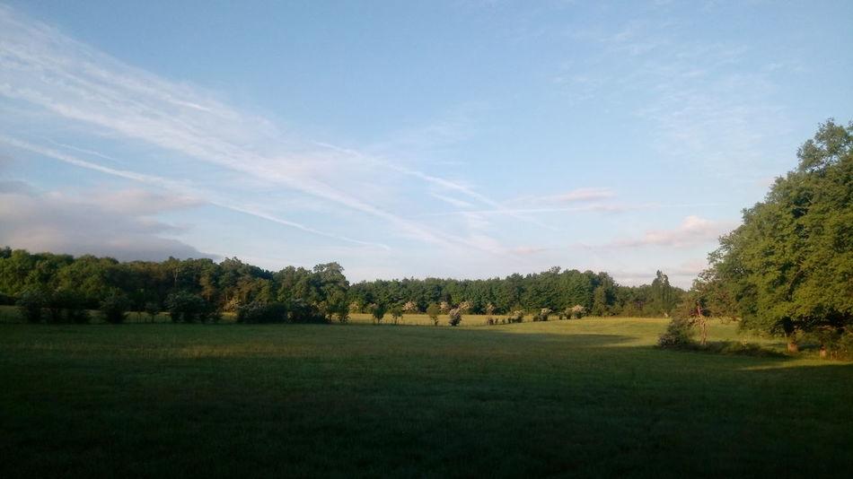 Tree Playing Field Sport Soccer Field Rural Scene Field Sky Grass Landscape Cloud - Sky