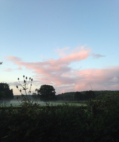 Misty Morning Good Morning World! Cloudporn Fall Beauty EyeEm Nature Lover Sky_collection Skyporn My Cloud Obsession☁️ Pink Clouds Clouds My Best Photo 2015 Pastel Power Landscapes With WhiteWall Landscapes Landscape