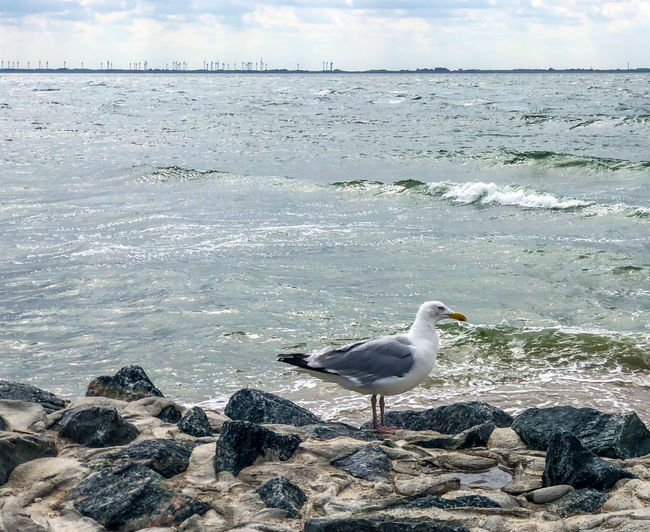 Seagulls Animal Themes Animals In The Wild Beach Beauty In Nature No People Norderney Norderney Ist Mein Hawaii Nordsee Northsea Northsea Coast Rock Sea Sea Me Seagull Sky Water