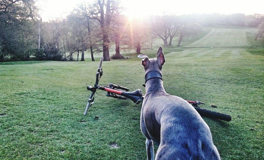 Traildog Outandaboutbiking Squirrelwatch