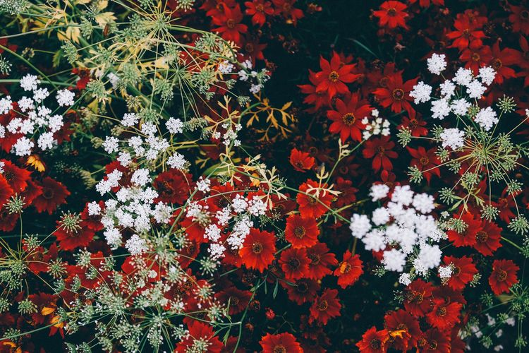 Plant Flower Growth Freshness Nature Red Vulnerability  Fragility Backgrounds Outdoors