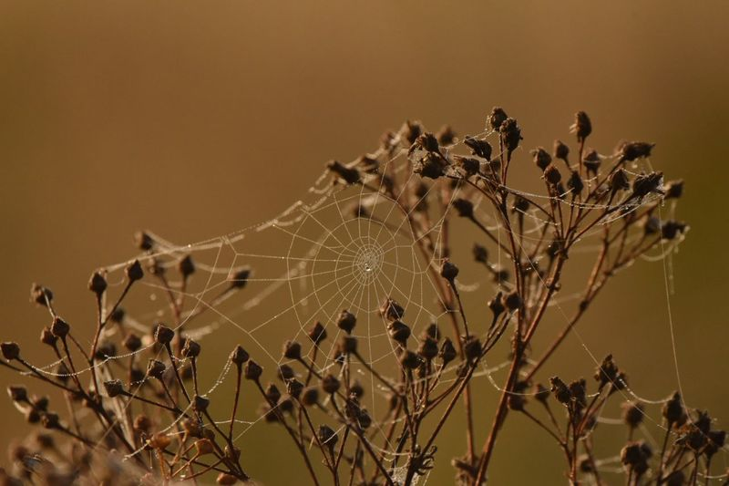 Autumn colors Autumn Collection Dew Drops Spiderweb Cobwebs Close-up Sky Plant