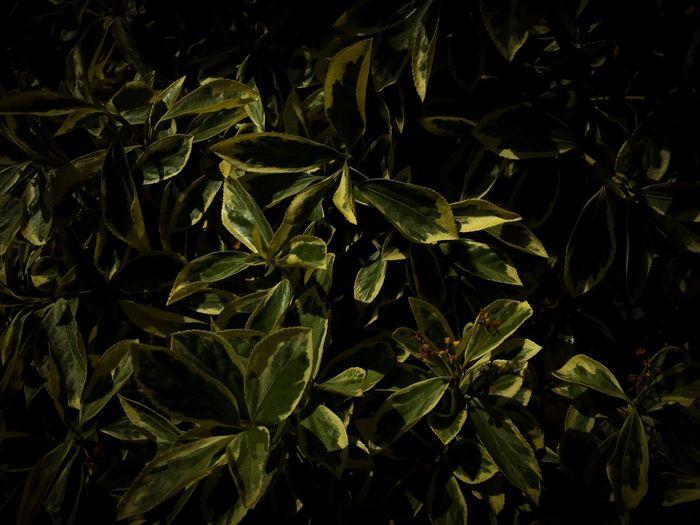 Full Frame Shot Of Green Leaves At Night
