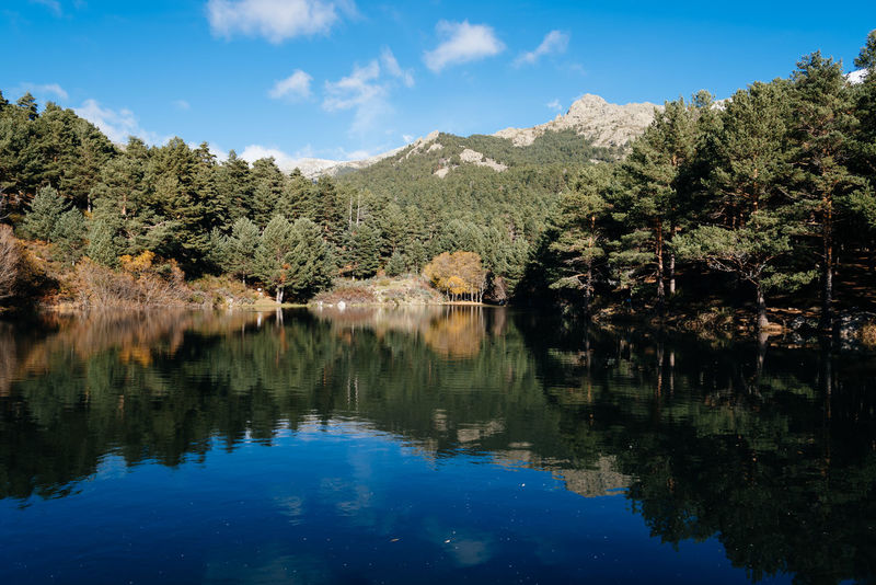 Reflections on Mountain lake Beauty In Nature Day Forest Idyllic Landscape Madrid Mountain Mountain Range Mountains Nature Navacerrada No People Outdoors Pine Pond Reflection Reflection Reflection Lake Scenics Sky Tree Water Water Reflections WoodLand