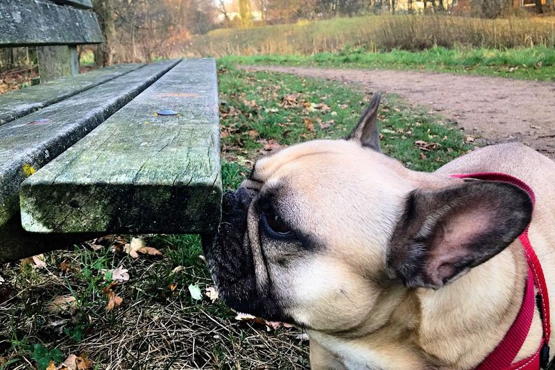 Exploring Style Dog Exploring Sniffing Around Park Bench One Animal Pets Domestic Animals Mammal Animal Themes No People Day Outdoors Grass Nature Close-up