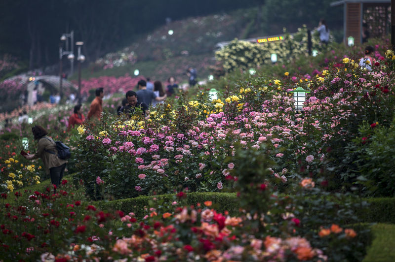 Flowers blooming at park