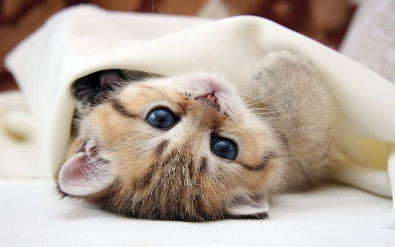Loving It  Beautiful Cute Cats Catstagram Cute Animals Cutenessoverload Adorable Baby Adorable Cat  Eyes Are Soul Reflection