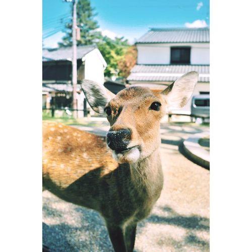 Cute Day Deer