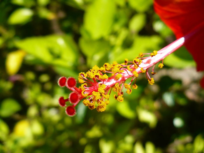 Plant Close-up Red Flowering Plant Beauty In Nature Flower Nature Pollination