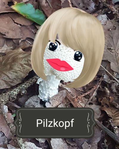 Text No People Pilz Pilze Fotografieren Fotoshop