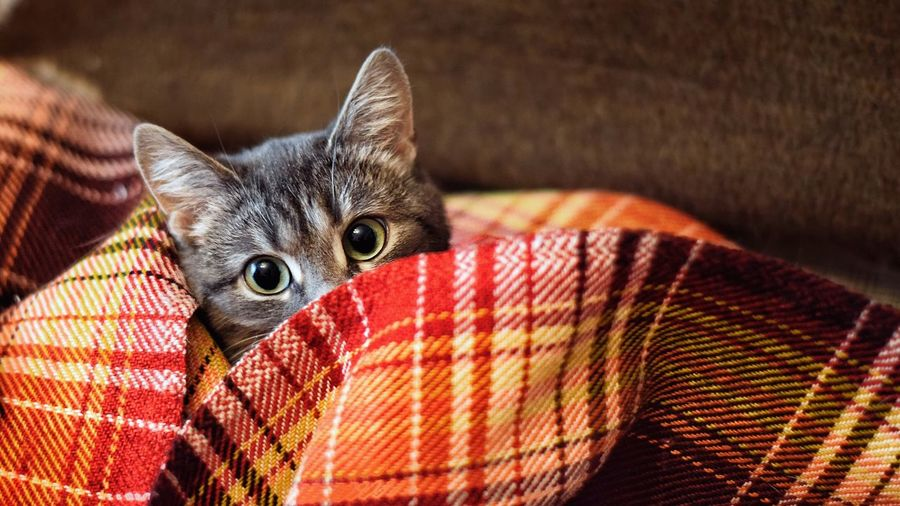 Animal One Animal Pets Animal Themes Mammal Domestic Animals Domestic Animal Body Part Furniture Whisker Close-up Domestic Cat Indoors  Textile No People Relaxation Feline Vertebrate Cat