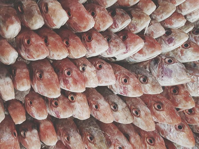 EyeEm Selects Abundance Large Group Of Objects Seafood Backgrounds Leisure Activity. Leisure Activity Peaceful Directly Above Healthy Eating Freshness Nature Seafood Close-up Textured  Food And Drink Animals In The Wild Fishes Beach Fishing Port Leisure Activity Food Stories