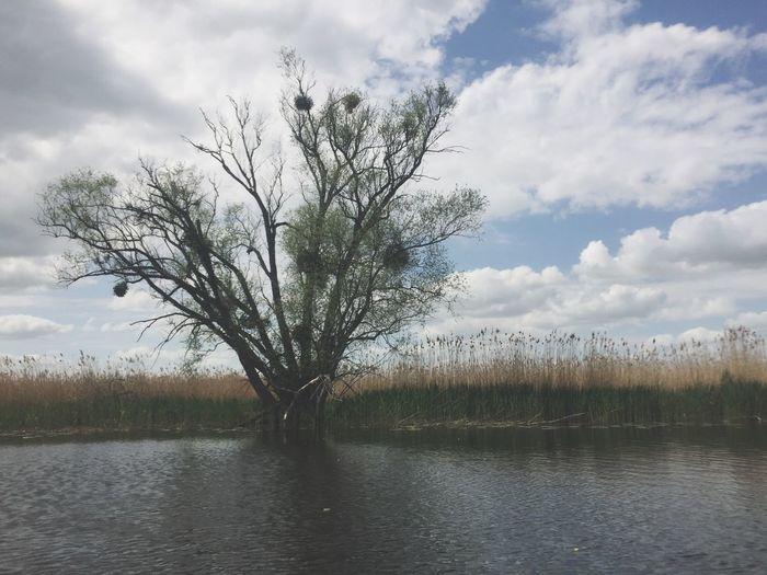 Tree Water Waterfront River Bird Nest Birds Nest Oder Nature Landscape