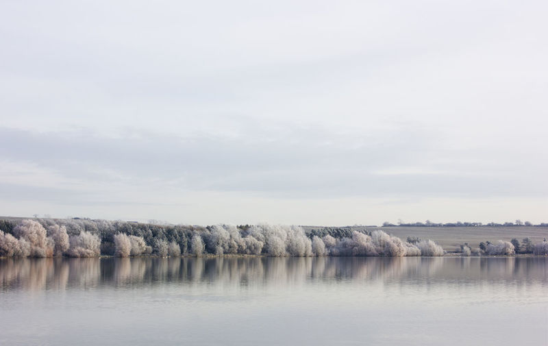 Morning Nature Trees Winter Beauty In Nature Cold English Landscape Frosty Lake Landscape No People Resevoir Serene Winter Morning